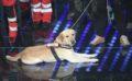 Sul palco dell'Ariston c'era anche Corto, il labrador che ha salvato tante vite ad #Amatrice