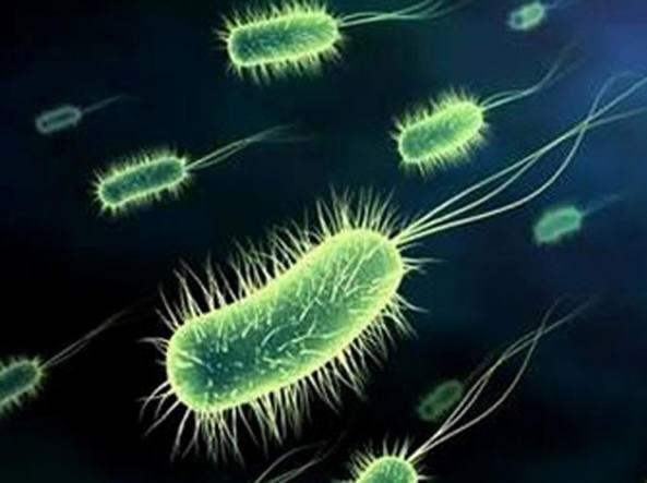 Superbatteri, 7000 morti l'anno per infezioni: l'obiettivo di un convegno al Senato di Roma