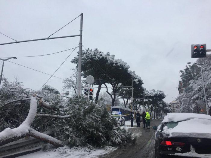 Roma paralizzata da alberi e rami caduti. Tram bloccati e strade chiuse in diverse zone della città