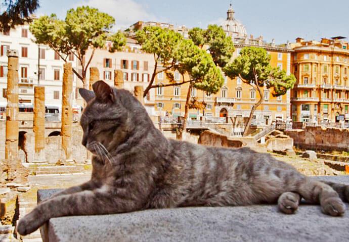 AAA cercasi nuovo gestore per la colonia felina più antica di Roma, al via bando per 250 gatti