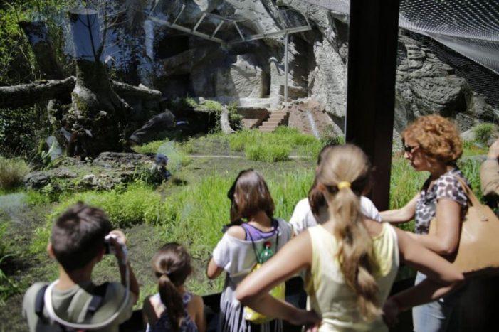 Bioparco, a Ferragosto la cocomerata per gli animali. Tanti gli appuntamenti per i piccoli amanti dell'ambiente