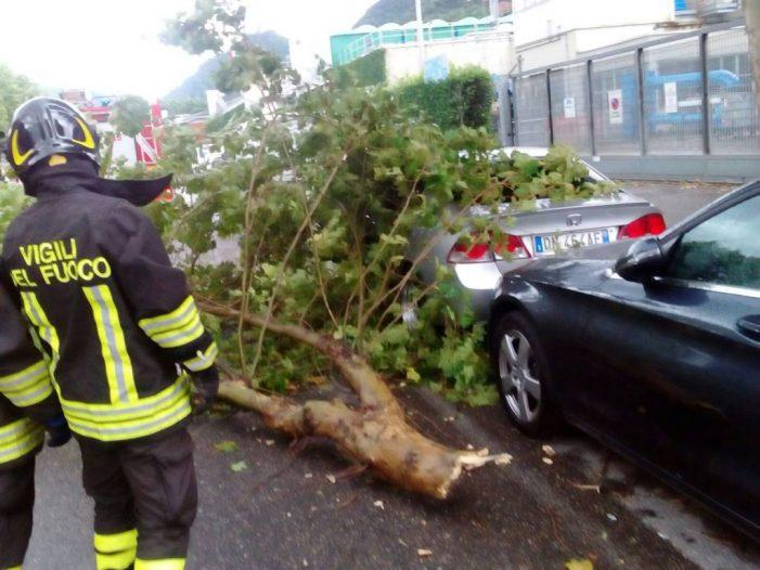 Ancora temporali su Roma, albero cade sulla Cassia bis danneggiando una macchina. Traffico bloccato
