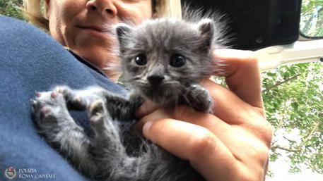 Abbandonati tre gattini al Camping River, la Polizia tenta il tutto per tutto per salvarli