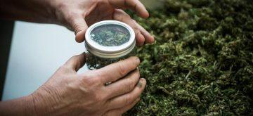 Cannabis-shop, aumenta l'uso delle droghe tra i giovani per il 60% degli italiani. Indagine Piepoli-Moige