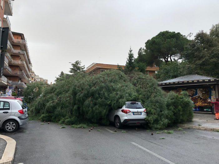 Vento fa strage di alberi in città, un platano distrugge auto a via degli Ammiragli. Attesa forte pioggia