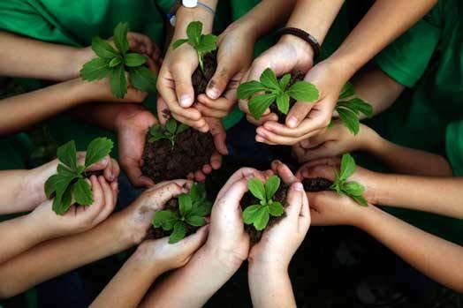 Gallone (FI): bene ministro Costa su corsi di educazione ambientale a scuola
