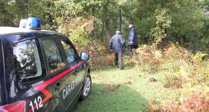 Cercatore di funghi si perde nel bosco del viterbese, raggiunto e soccorso dai carabinieri